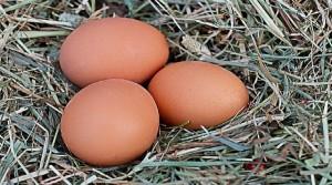 Eier 900 500